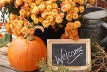 Harvest Season / by Michelle Luby