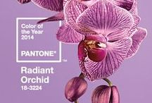 2014 PANTONE Color of the year / RADIANT ORCHID  / by DELSEY USA