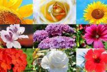 FLOWERS / by Julia Apostolova