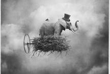 Elephants / by Isabella Lercari