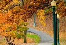 Fall Spirit / by Yessie Ferrer
