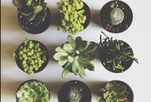 Plants & Succulents / floura, cacti and DIY / by Joan Macrino