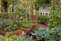 The Joy of Gardening / by Steve Robison