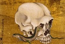 skull / by luiluiramone experience