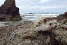 cute <3 / by Anna S 23!!!!!