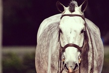 Dream Horses  / I am a little partial to grays :) / by Anjali Lynn