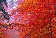Autumn -  My favorite time of year! / by Trudy Allen