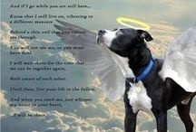 For my boy Colt, He's gone 10/4/13  :'( / My boy maybe leaving soon to go be with his sister Cheers and it is killing me. But he has had a good long life and I will miss him more then words can express. I see him getting weaker every day and I hope to have the power in my heart when time comes to say goodbye.  HE IS GONE !       :'(   10-04-13   R.I.P. my hero.  / by Lisa Smith