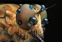 Animal Reference_Insects and Arachnids / by Alfonso Prieto