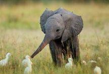 Cute critters / by Kathryn Aspaas