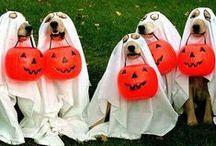 Boo! Halloween & Crafts... ✿ / by Rafaela Loyola ✿