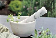 Gardens | Apothecary Garden / Healing benefits from your garden.  / by Bluebird CSA.com