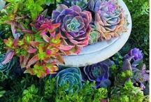 Garden  / by Starla Spencer-Woodards
