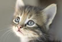 ♥ Le chat / by Anne-Marije