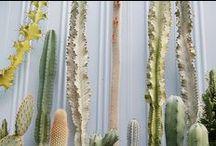 plants / by alice clayden