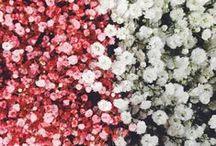 floral / by alice clayden
