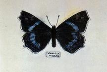 butterfly motifs / by Holly Hunt