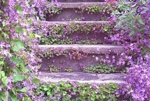 Gardening - Landscaping & Design Ideas / by Mary Goulas