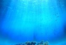 Ocean / by Courtney Auletta