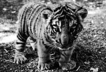 Baby Animals :3 / by Courtney Auletta