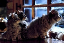 Well-Placed Fluff... / Cats in pretty settings / by Alex Brownstein