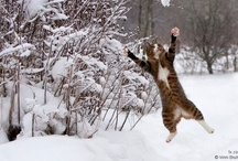 Felis in Flight / by Alex Brownstein