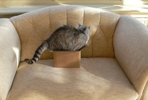 ...boxed! / by Alex Brownstein