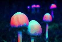 Shrooms O.o / by Courtney Fritsche