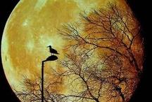 Moonbeams / by Gloria Cain