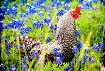 Rooster & Friends / by Gloria Cain