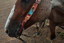 Horse tack / by Aubrey Griffin