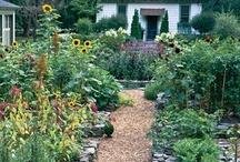 vegetable & herb gardens / by Kathleen Vizard