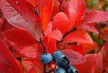 Falltime / by Denise Hunsley