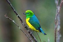 Vogels / Op dit bord staan ook uilen en duiven en eenden die ook tot de vogel soorten behoren. / by Karin H.