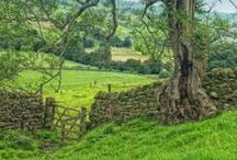 British Country Life / by Janet Nishi