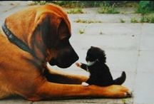 Dogs and Cats / Pictures of dogs and cats together / by Treasured Friends - Pet Memorials / Pet Keepsakes