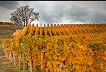 Winery Tour / How many can I visit? / by Lucile Arnusch
