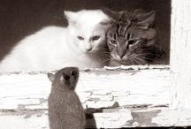 Creatures with 9 lives / #cats / by Zeljka's Way