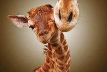 Animals / I love animals!!! Anyone would be crazy not to! / by Jess Spencer