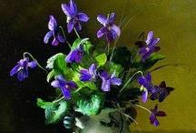 Viola (plant)- La Violeta / by concepcion vic