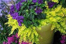 Container Gardening Recipes / by Julie {The Hyper House}