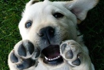 Pets: Puppy Love / Adorable, cute pups and doggie stuff  / by Margie Leow