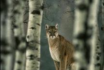 Animal kingdom / by MTHolisticLiving | Melinda Turner