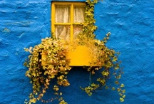 MyWindows / by Tanya Philp