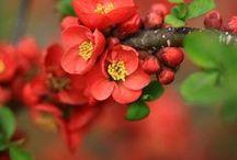 Flower / by Verena