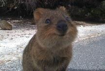 Animals - Cute / by Danielle Edwards