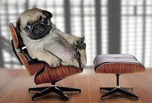 Animals - Pups - Pugs / by Danielle Edwards