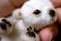 Animals - Bears - Polar / by Danielle Edwards