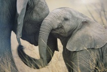 Animals - Elephants / by Danielle Edwards