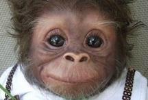 Animals - Monkeys / by Danielle Edwards